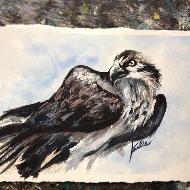 Eagle Eye: colour and light study - acrylic paint on watercolour paper