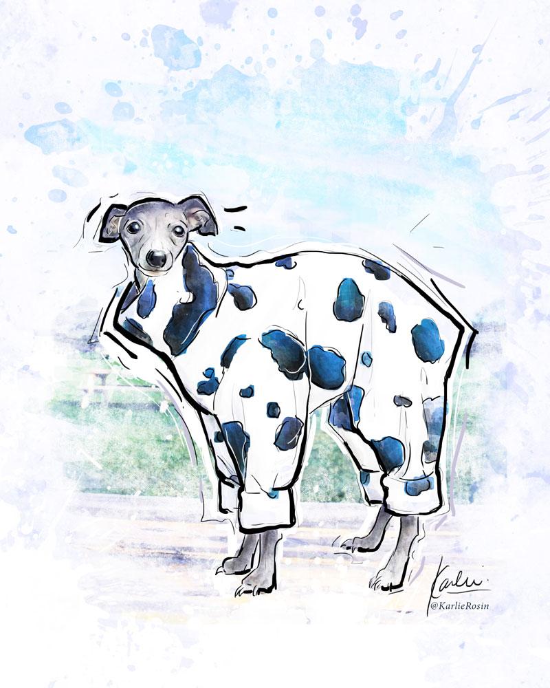 Pet Illustration: custom dog portrait commissioned artwork | Tika the Iggy - mixed media