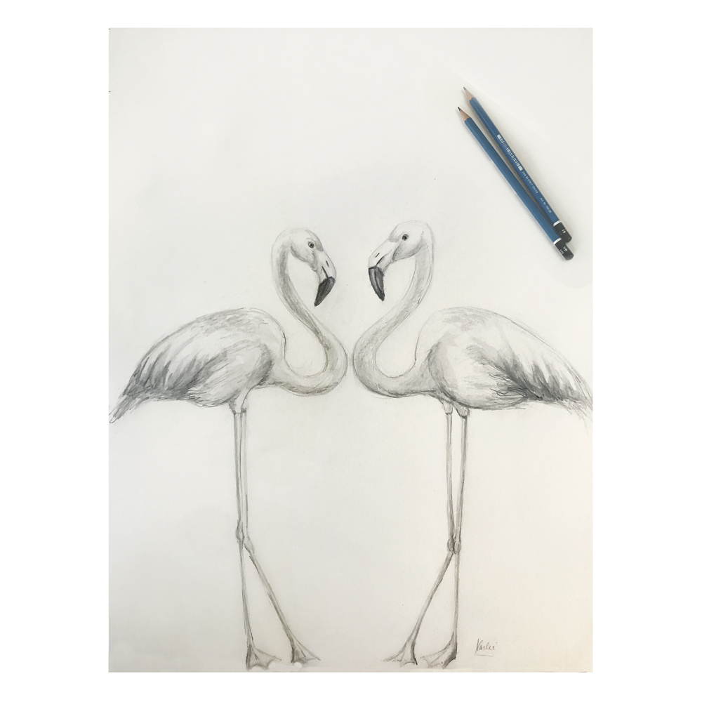 Flamingos: pencils and watercolour on watercolour paper