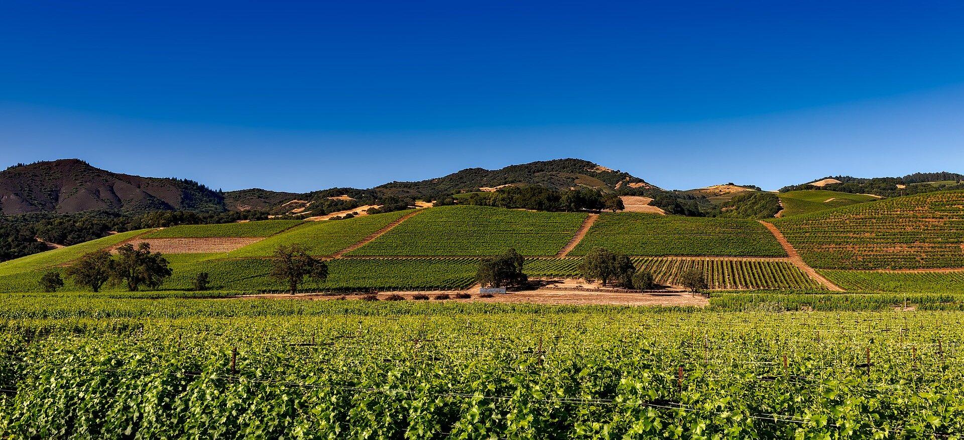 vineyards-1590014_1920.jpg