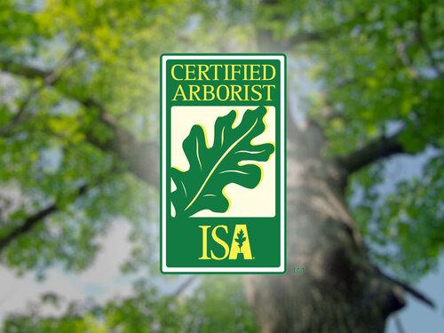 tree arborist services