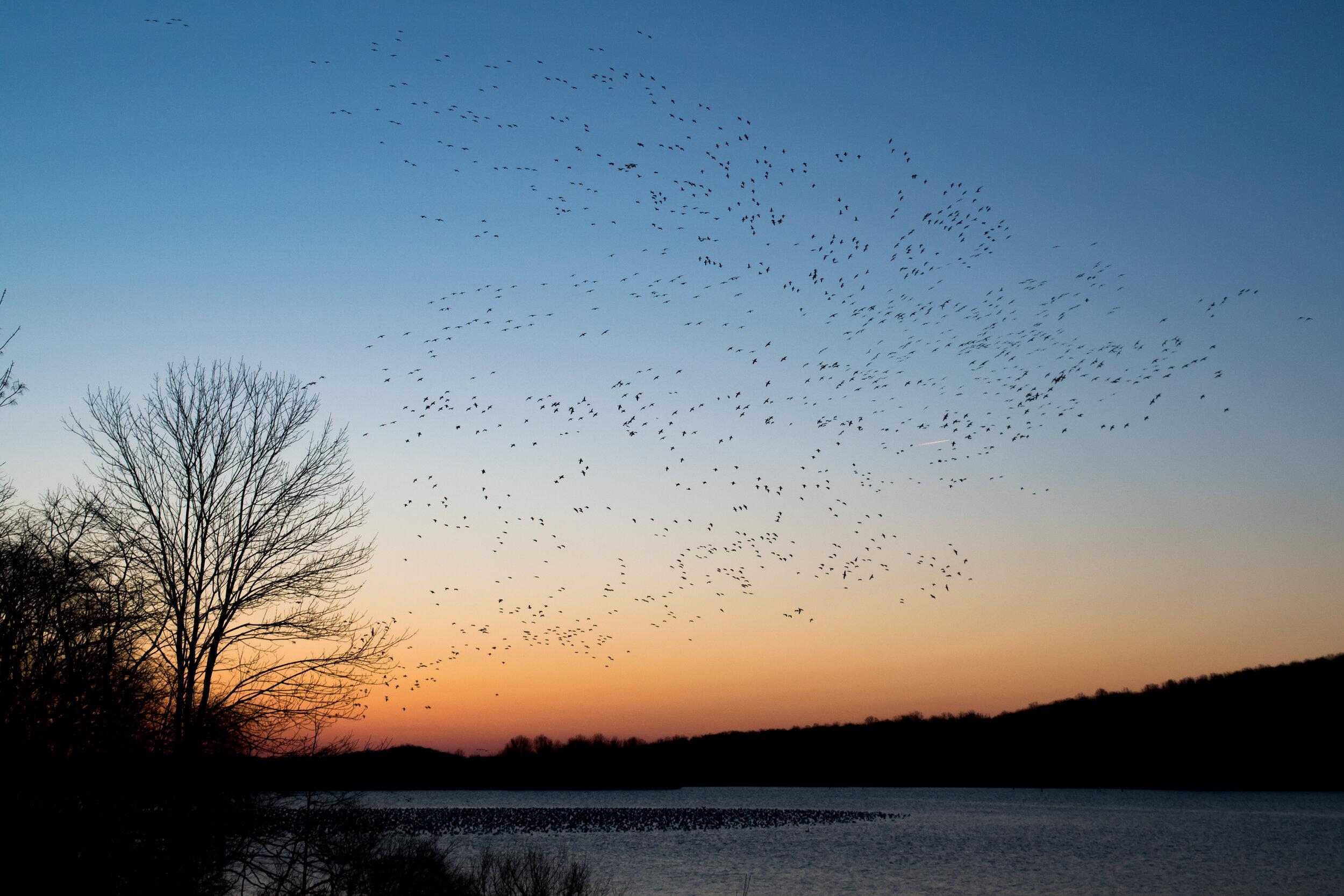 birds flying against sunset