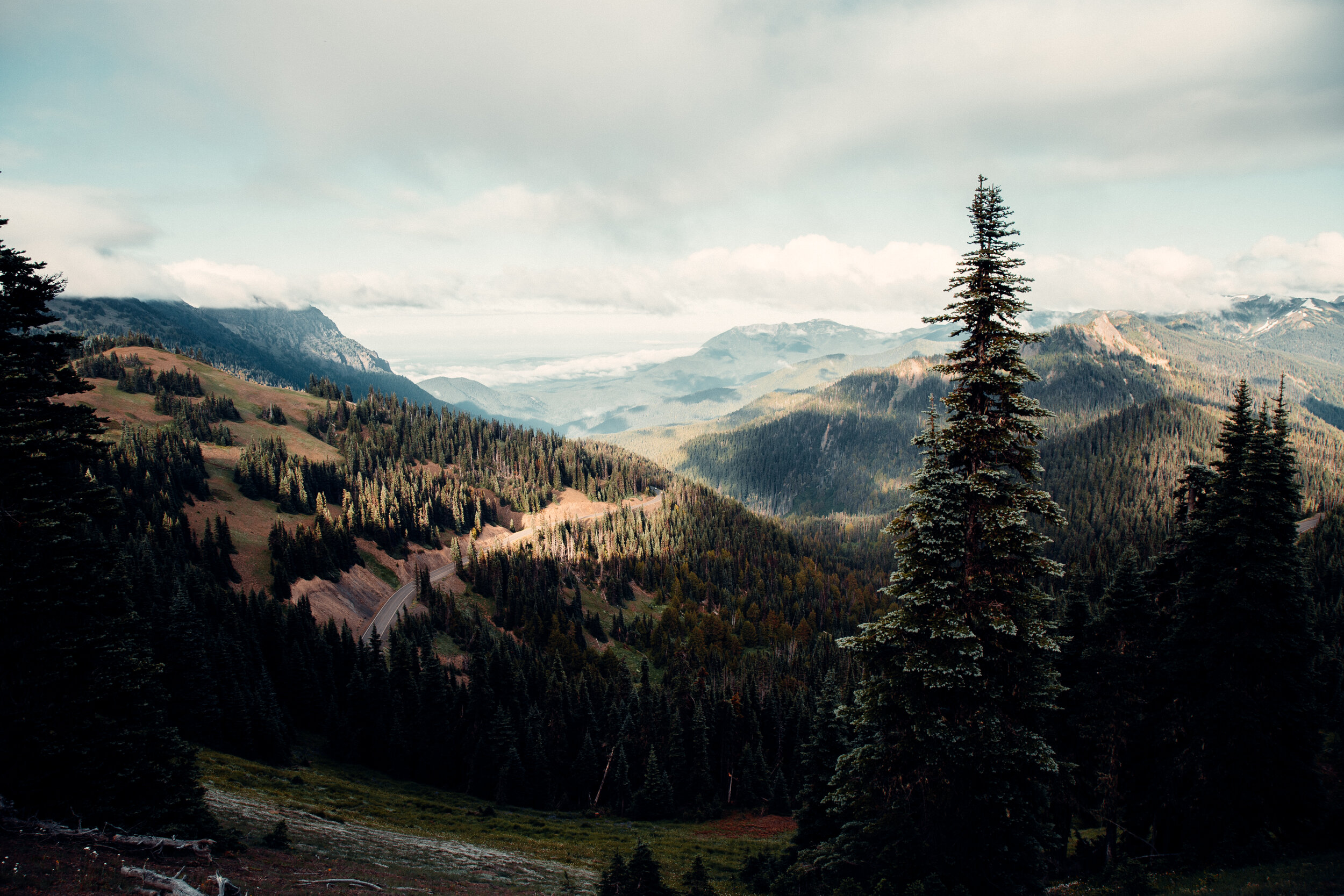 view of mountains and pine trees