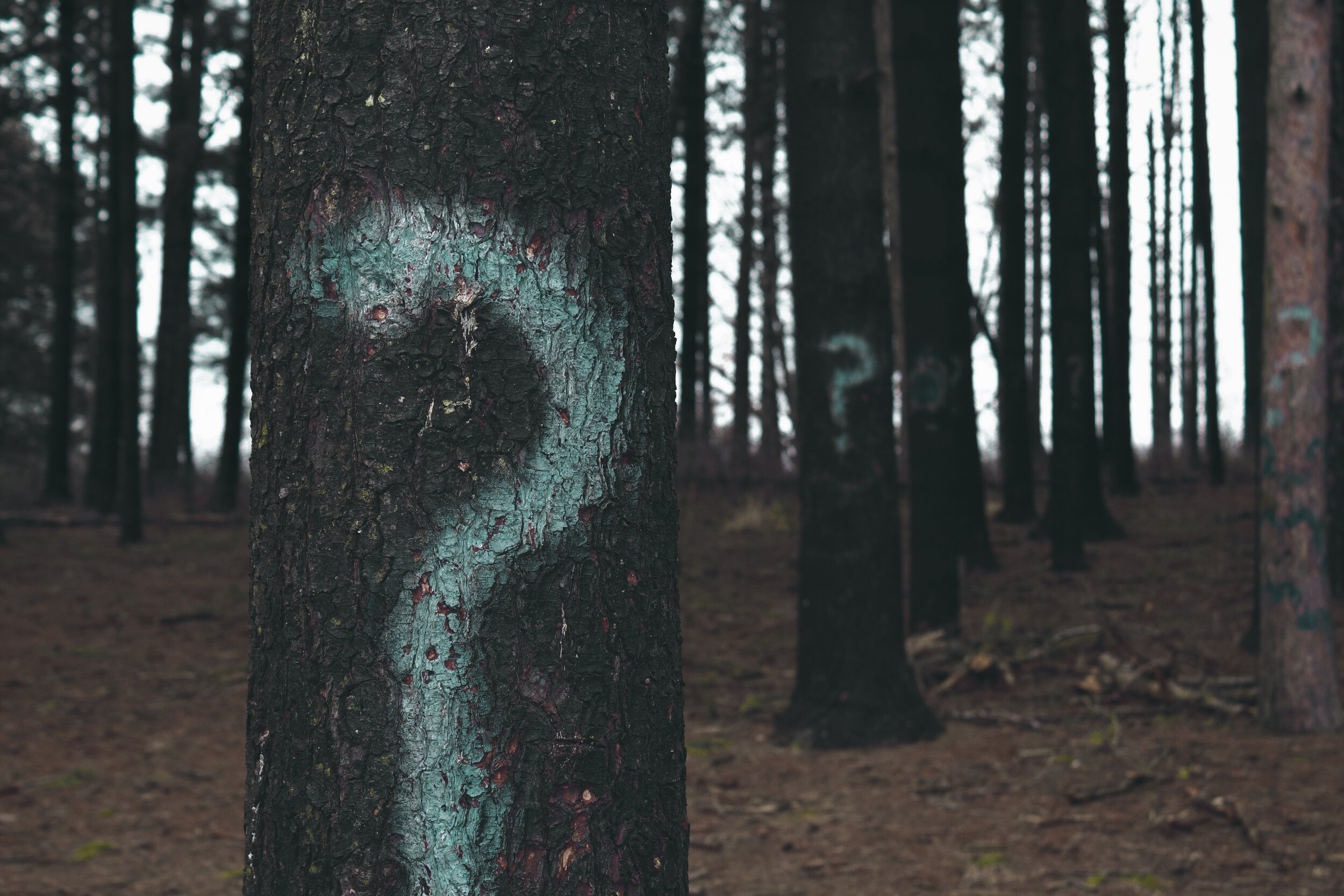 open forrest with trees and blue question marks