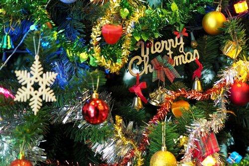 branch-celebration-christmas-264995 (1).jpg