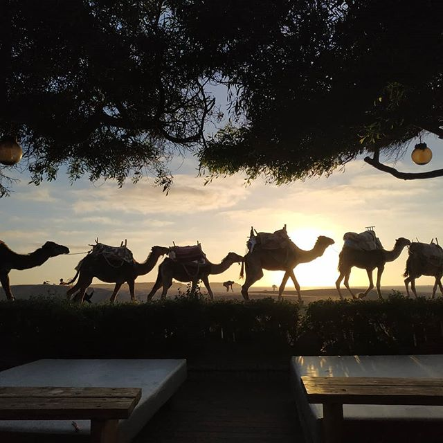 #sunsetbeach #gnaouafestival #lifesabeach