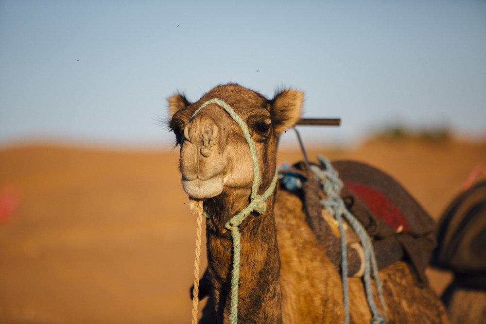 morocco-desert-resort-camp-adounia-morocco.jpg