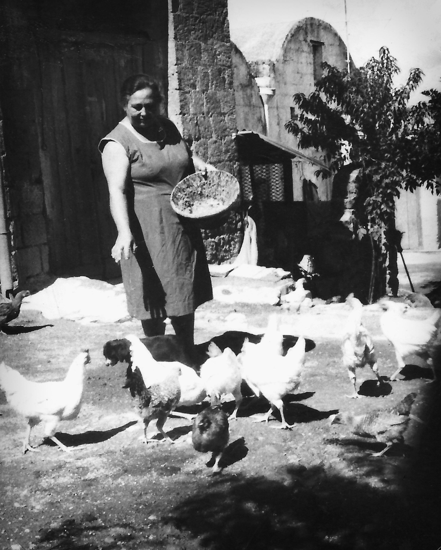 Nonna Ida feeding the chickens on the family farm in Monte di Procida. - Circa 1965