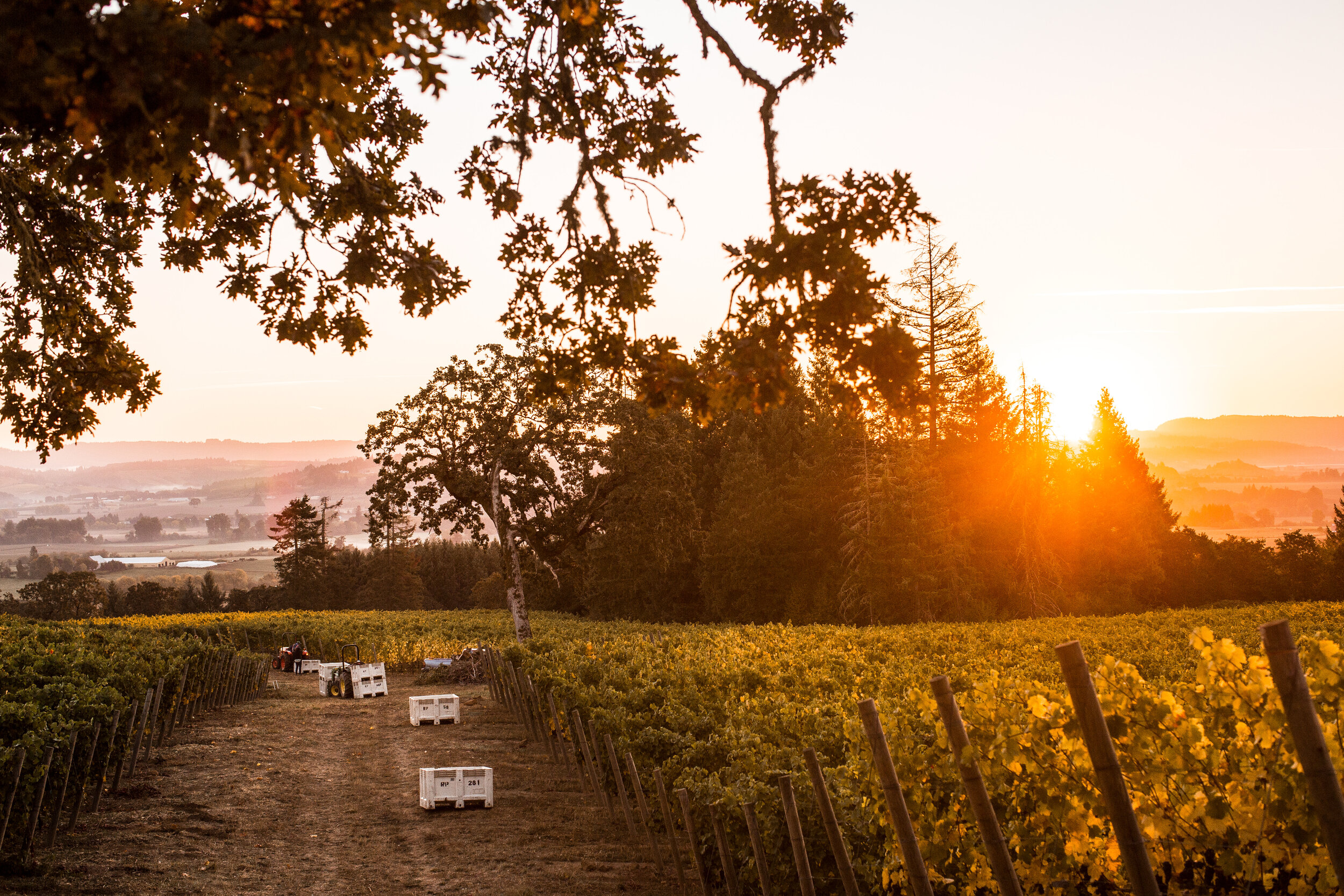- Board of DirectorsThe OWC Board of Directors is made up of 13 Owners and CEOs from the Oregon wine industry.