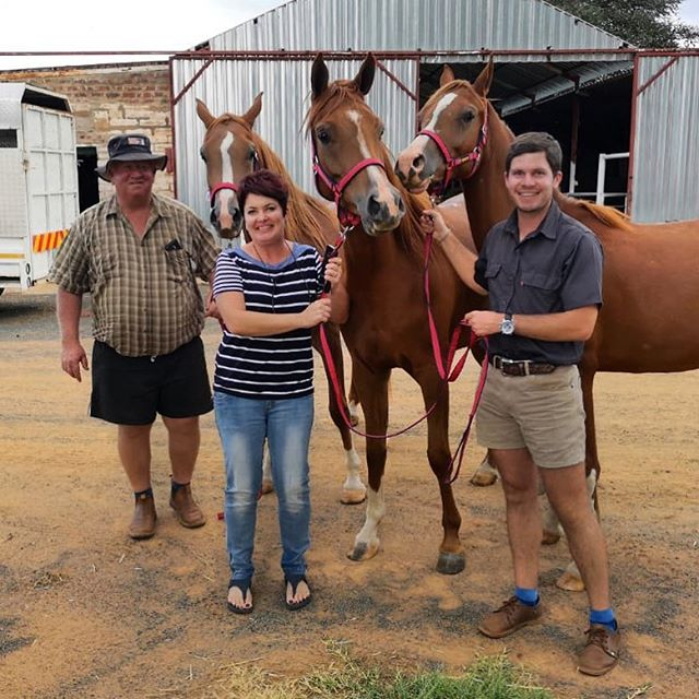 So happy to see our three chestnut ladies arrived safely in Jan Kempdorp! Congratulations to the Romburg family on the purchase of three stunning fillies! We hope they make you very happy! #arabianhorse #chestnut #fillies #inannaishtararabians #newowners