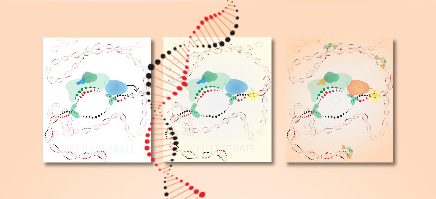 Tech Illustration_1_mirna reg-02.png