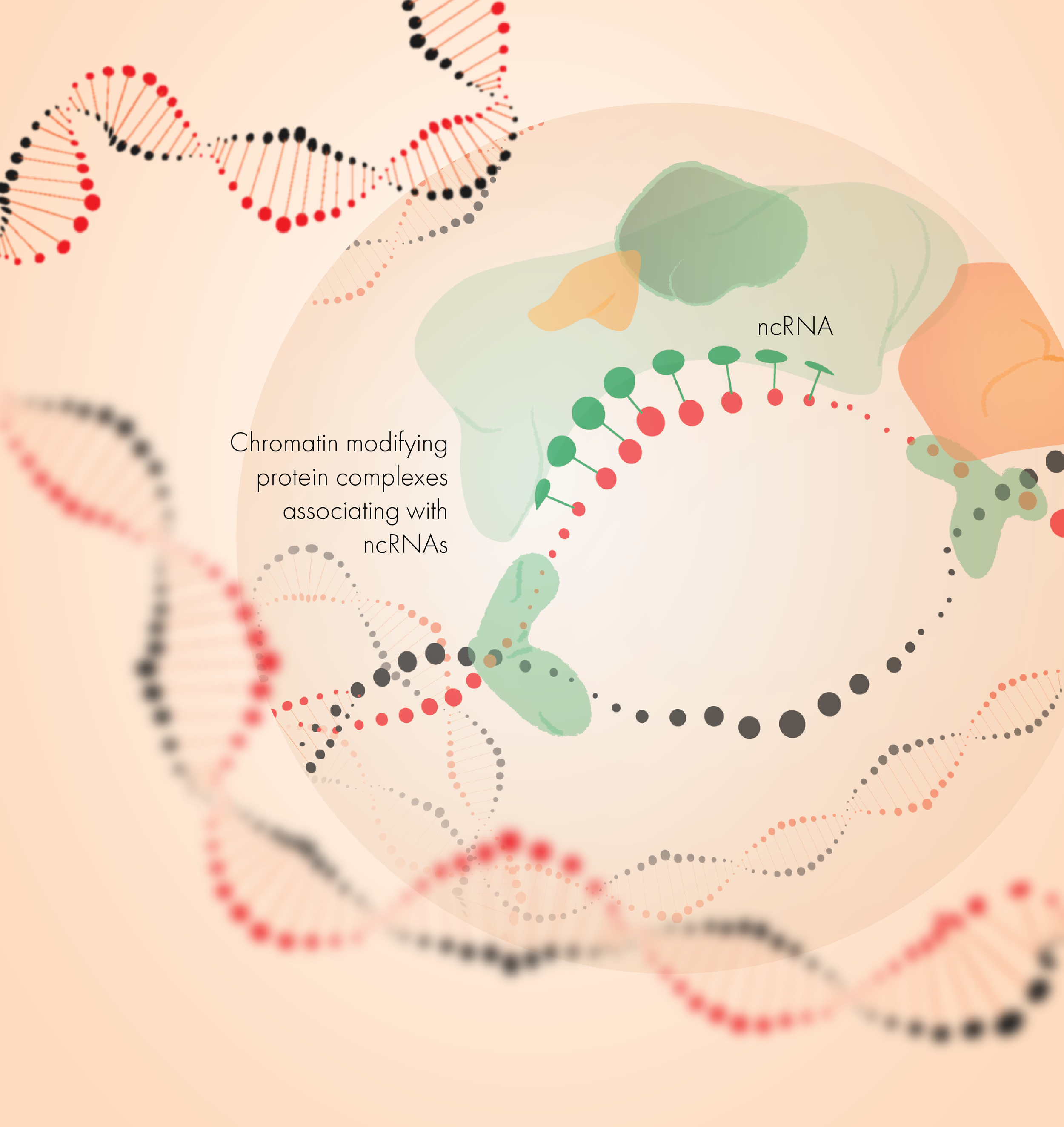 ncRNA mediated transcriptional regulation - 2D ILLUSTRATION