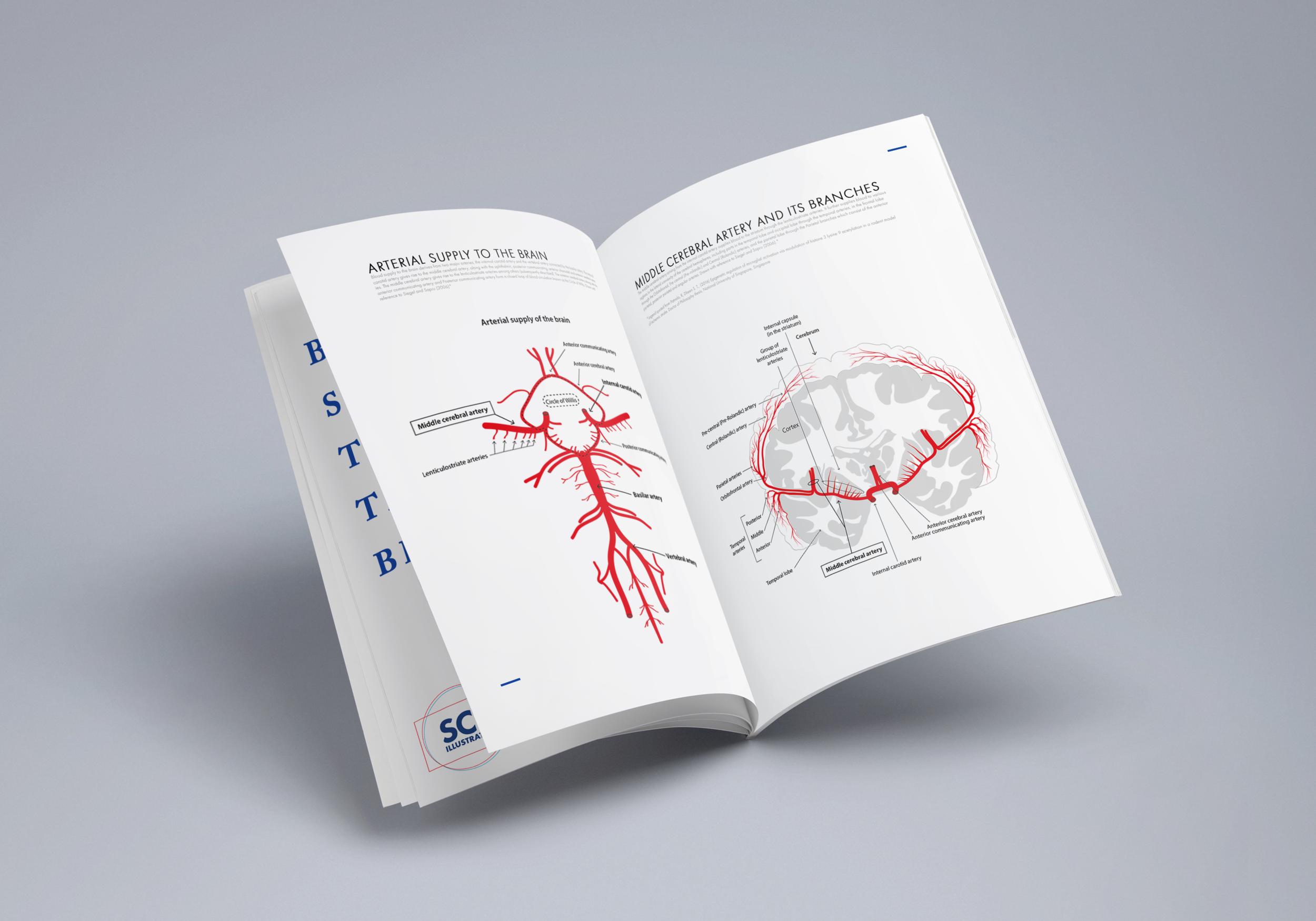 FeaturedBlood Supply to the Brain - 2D ILLUSTRATIONMOTION GRAPHICS