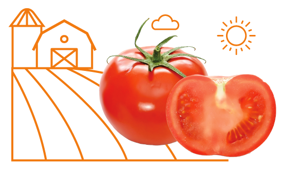 Tomatoes - Grown Fresh In CaliforniaAs a family company ourselves, we take pride in being able to say we source our tomatoes from a family first, fresh from the field company. Using tomatoes that are vine ripened in the sunny state of California, known for producing some of the nations freshest, tastiest tomatoes, we are able to bring our customers a sauce we are proud to serve.