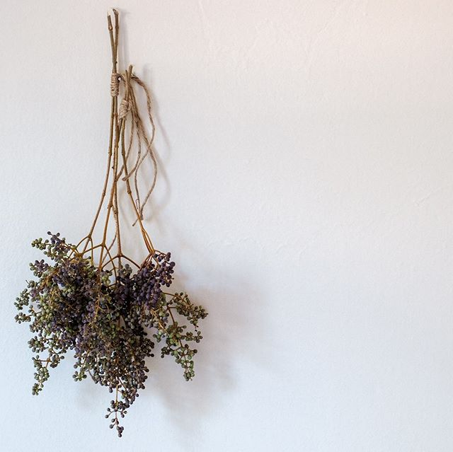 Today we're drying privet berries, and enjoying their smoky, mellow purple tones. These little berries add wonderful textures and depth to arrangements. . . . . . #driedflowerbouquet #driedflowers #bridalbouquet #weddingbouquet #weddingflowers #deadflowersociety #privetberry #contemporaryflowers #artisanflorist