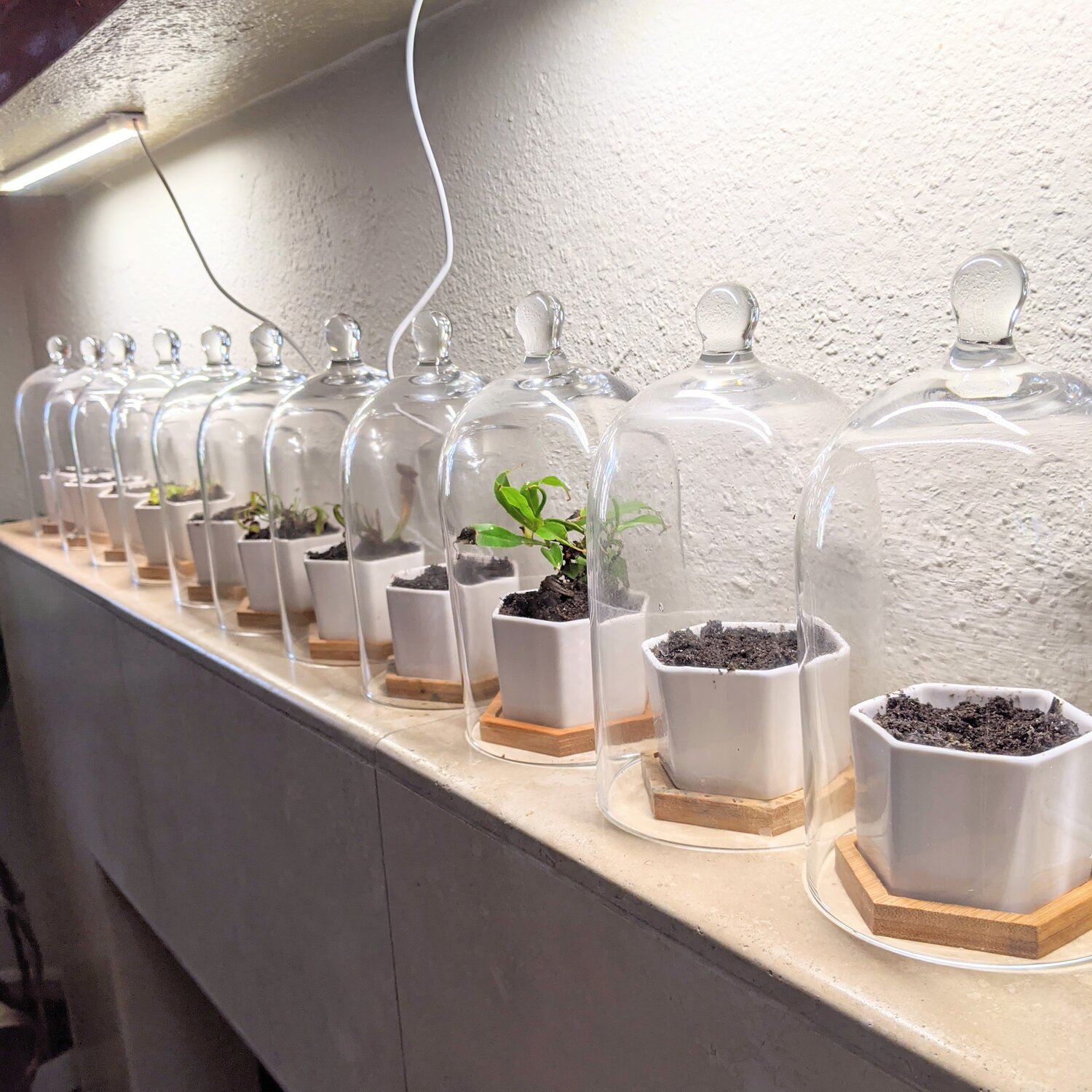 If you don't have a lot of space so you can't just hide away your seed projects, you can use glass domes to basically make your seed starting projects into home decor! Some of the other methods can be kind of an eye-sore, so this is a definite perk to glass domes!