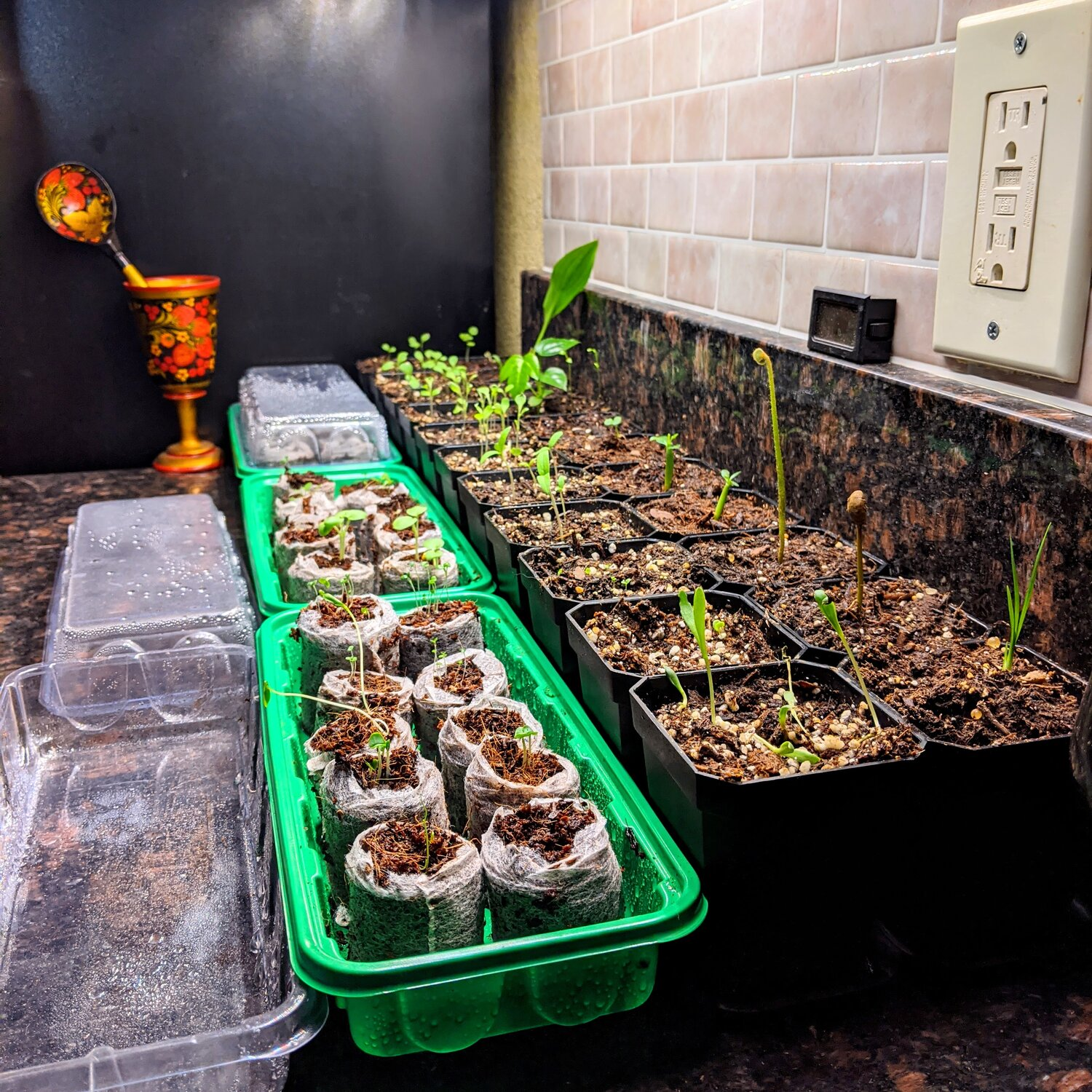Seed Sprouts in Mini Greenhouses
