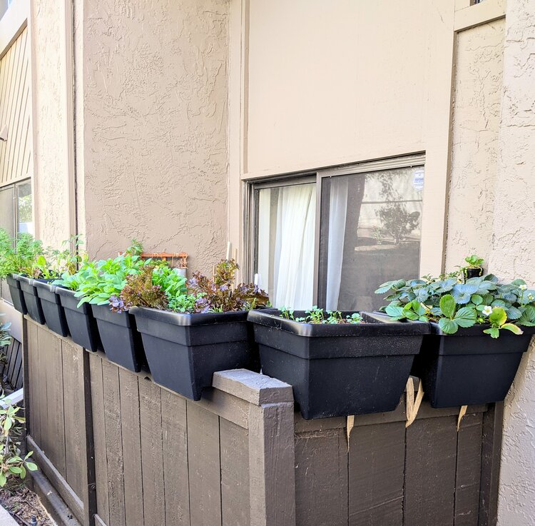 My little north-facing patio, by using planters that sit atop the wall I'm able to maximize the light that reaches the plants, and they're big enough to grow root veggies!