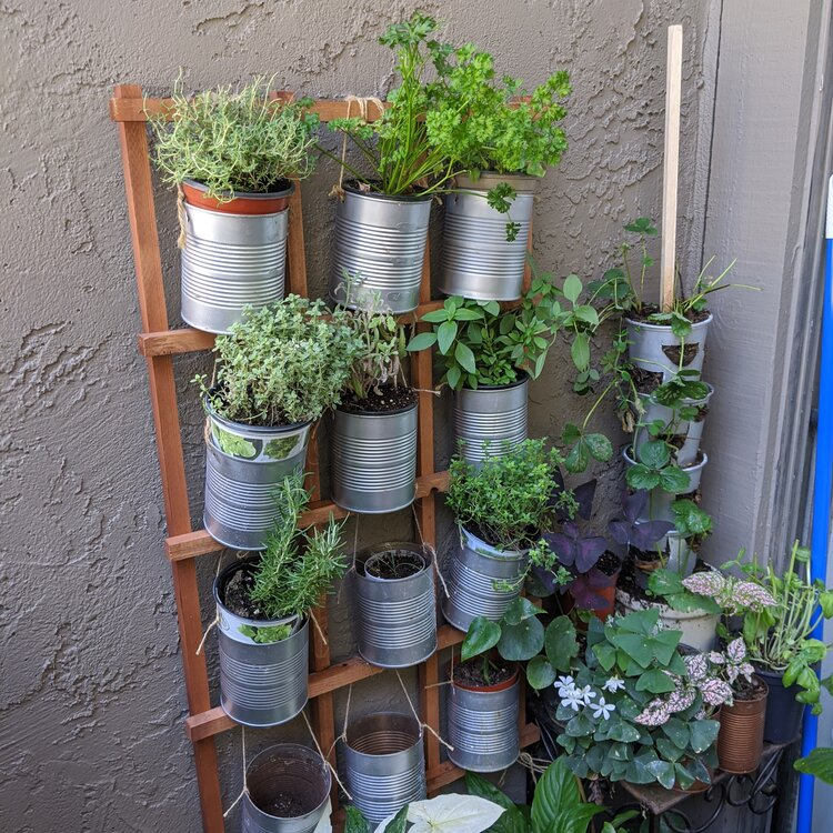 My little diy hanging herb garden, made with reused tomato puree cans and a simple lattice.