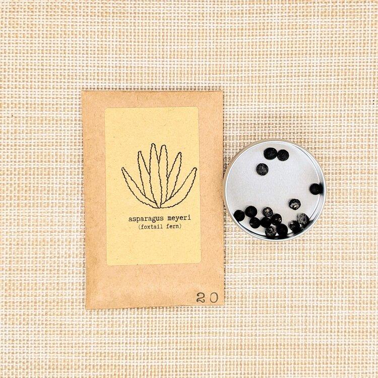 Foxtail Fern Seeds