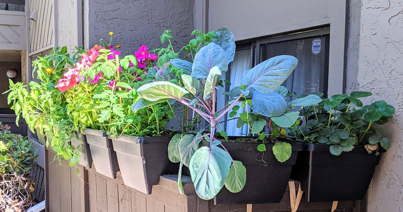 My patio in June, getting a little bit of sun!