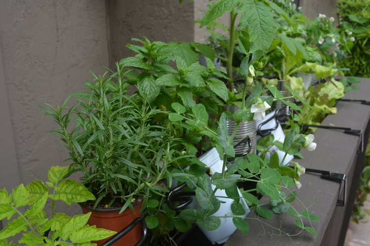 rosemary, mint, and in other spots there are basil, oregano and thyme.