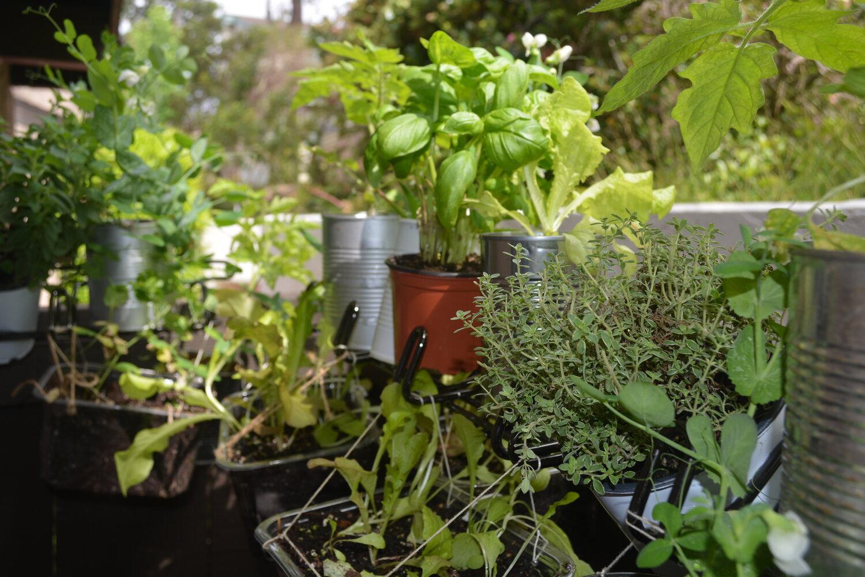 Creative DIY Vertical Gardening Setup