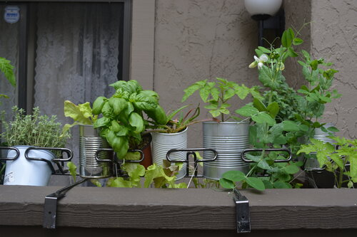 hanging herb and veggie garden