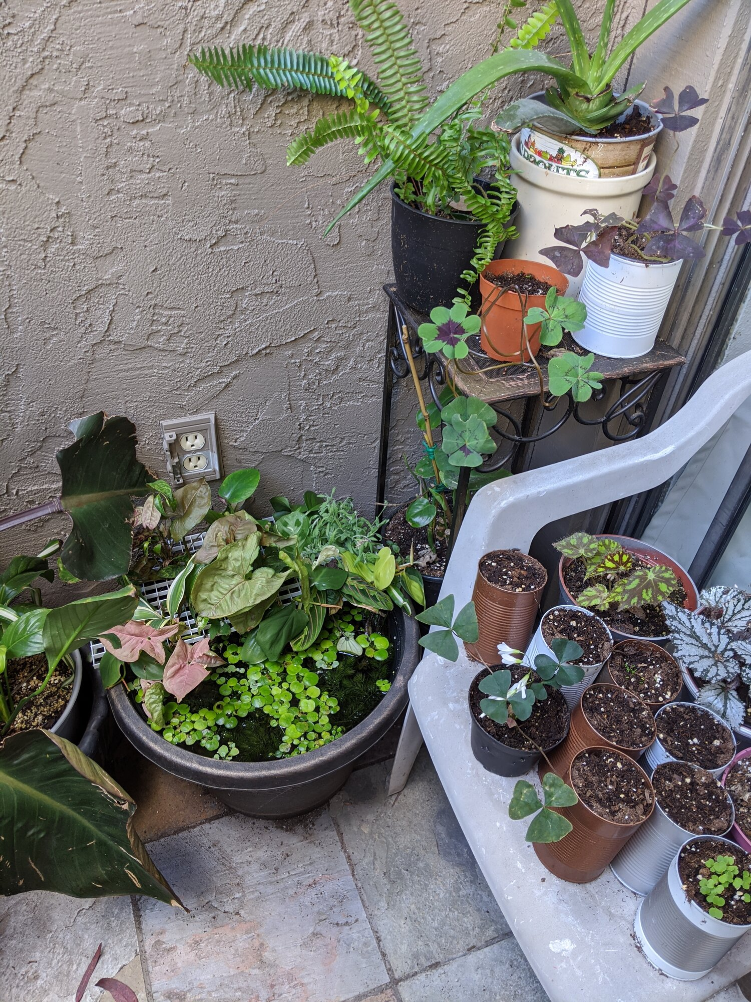 My little patio pond, with aquatic plants, minnows and tropical plant cuttings!