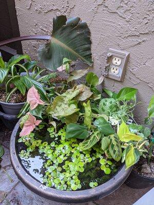 tropical patio pond