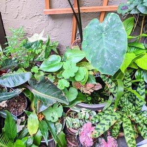 Patio Jungle