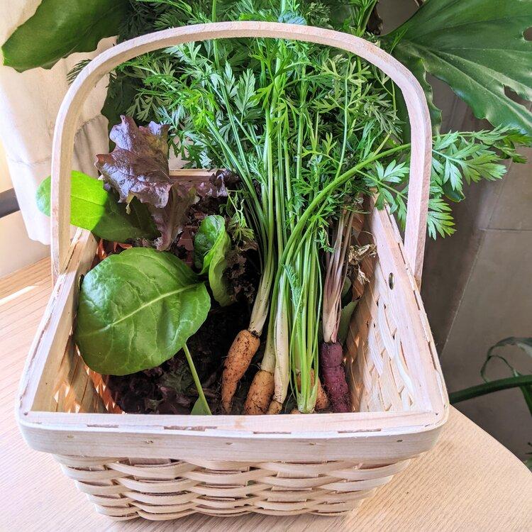 Patio Garden Harvest