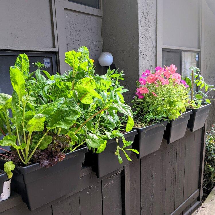 leafy greens on patio wall