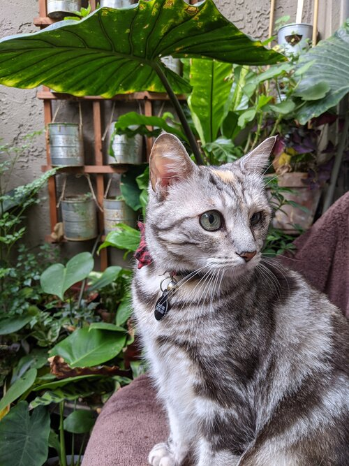 Maia the cat and the patio garden