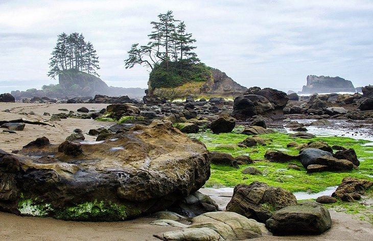 british-columbia-vancouver-island-hiking-trails-west-coast-trail.jpg