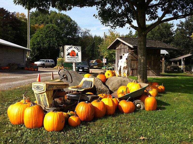 Aldor-Acres-pumpkin-display-IMG_0586.jpg