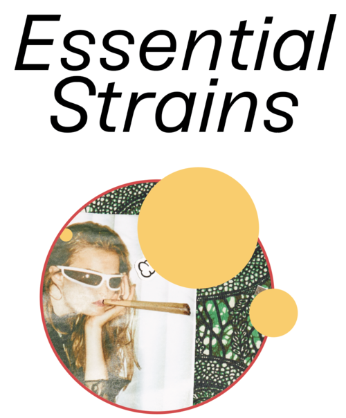 46 Saturday Strains The Full List 12 Alternative Strains The High Guide