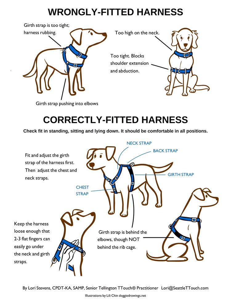 A wrongly fitting and correctly fitting harness (Doggie Drawings)