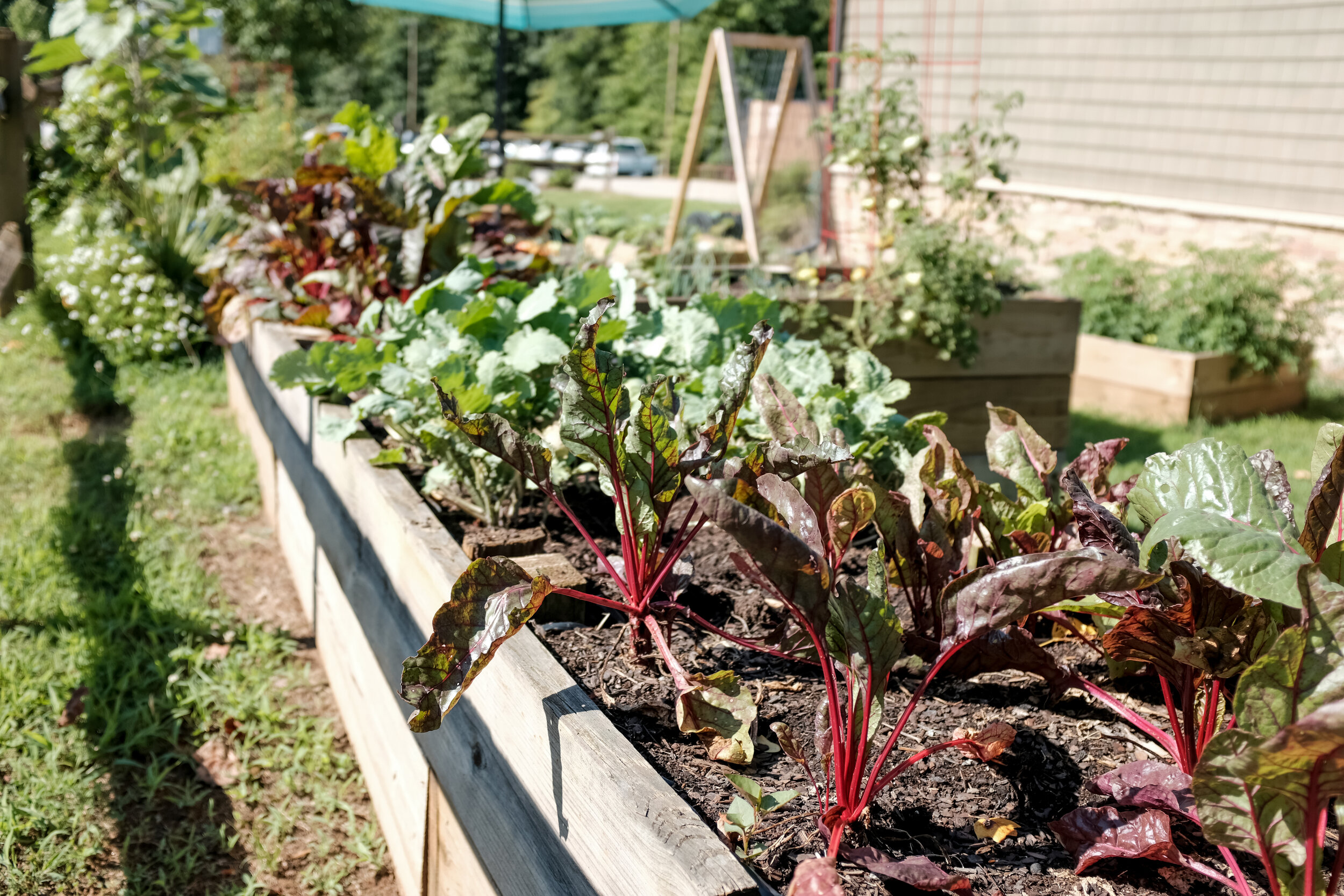 Our Favorite Resources For Vegetable Gardening Books Tools Soil