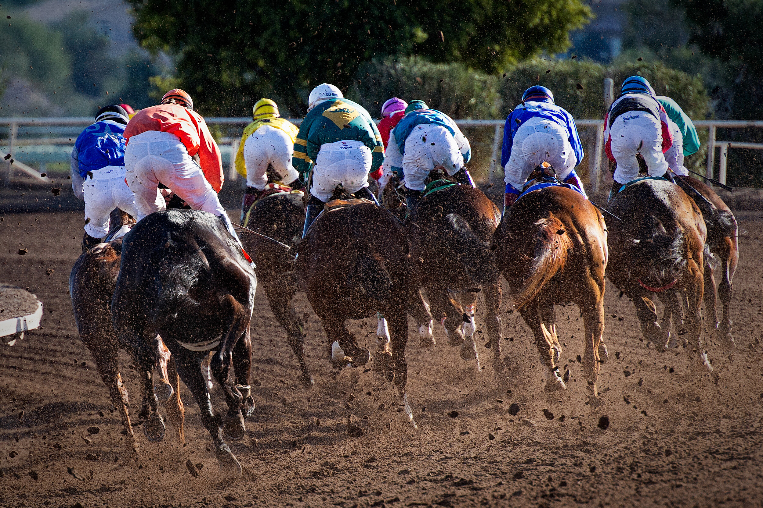 Horse betting online texas free ways to earn bitcoins