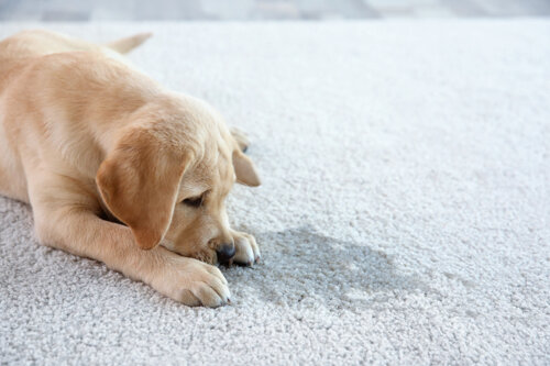 Copy Of Carpet Cleaning Gallery Company