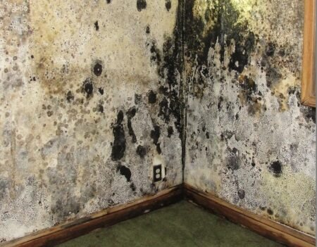 Moldy-Walls-Minneapolis-home-inspection-radon-test-inspections.jpg