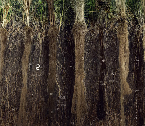 roots-soil-solutions.jpg