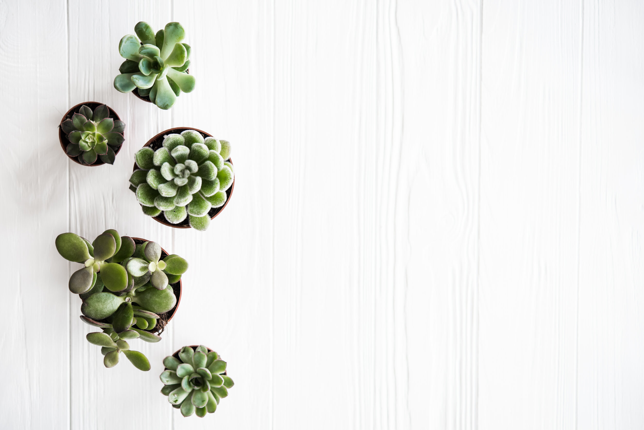 Indoor Plants For Your Minimalist Home