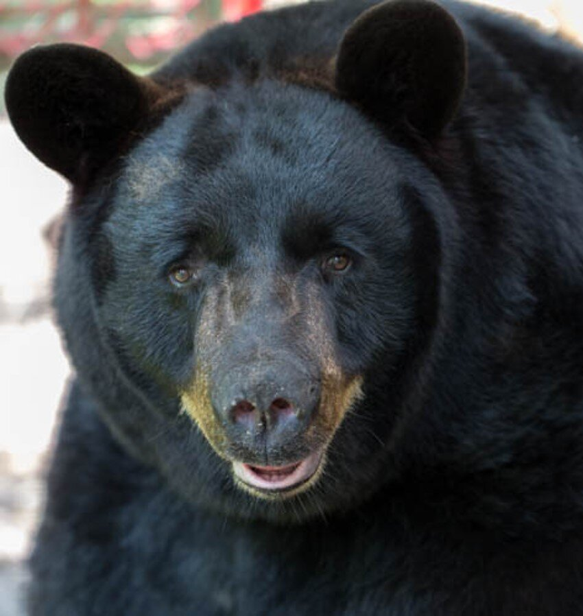 Photo Gallery — St. Augustine Wild Reserve