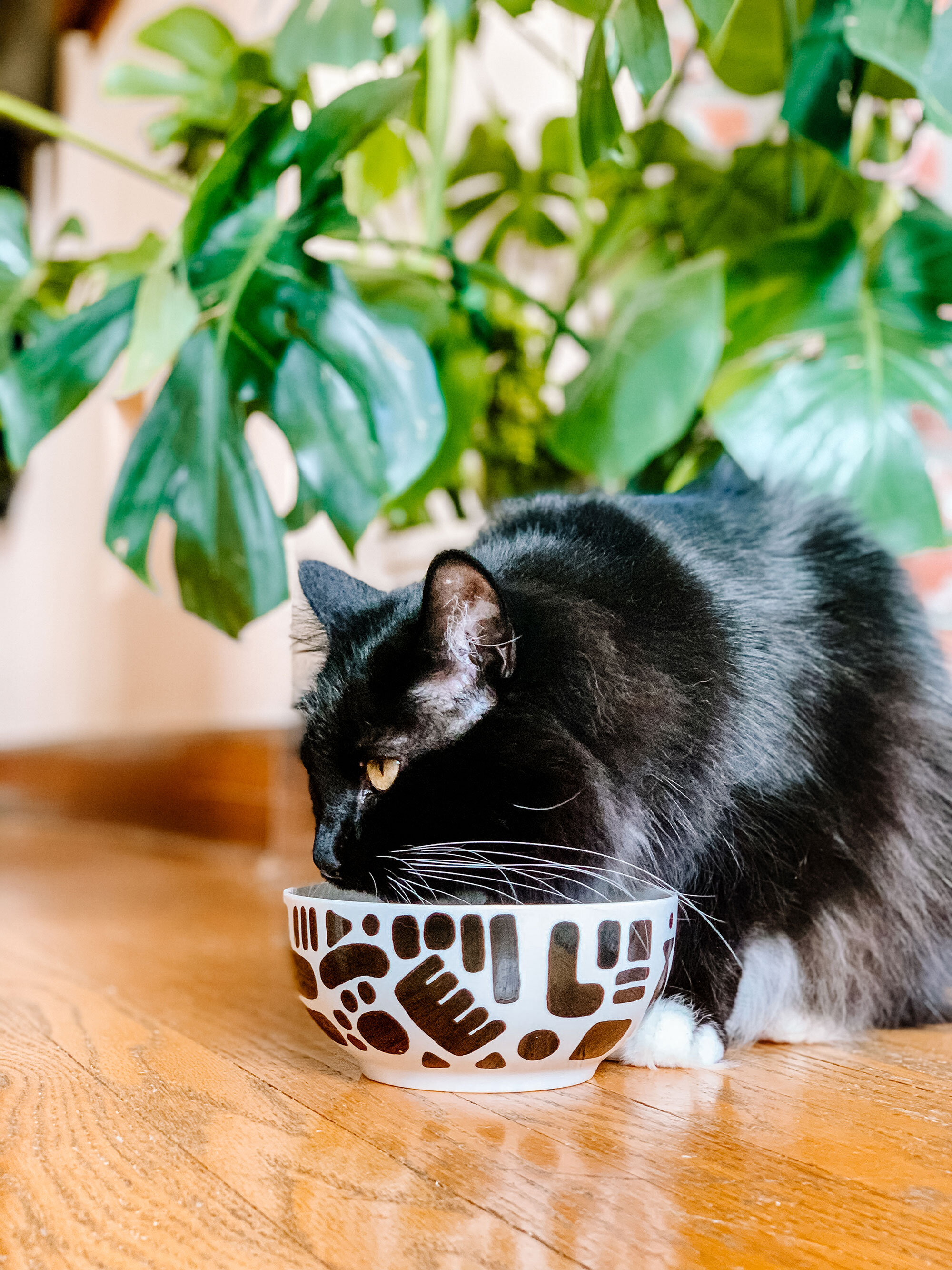 How To Make Painted Pet Bowls The Green Mad House