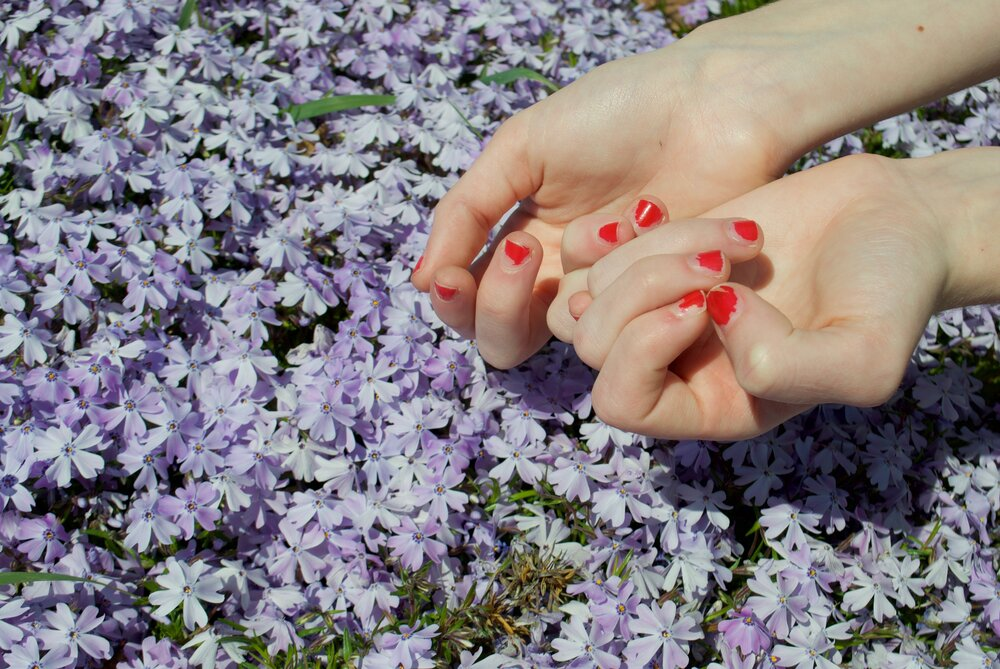 A pair of hands in the top right corner of the frame, wrists upturned. The subject, out of frame, holds their hands over a carpet of purple flowers and interlocks a few fingers. Their fingernails were painted red sometime ago and now the polish is chipped and worn away with use. The paint on each nail has naturally developed scalloped contours, not unlike the edges of the petals below.