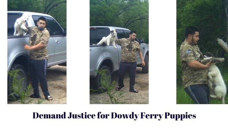 Animal Advocates Seek Justice From District Attorney For Alleged Puppy Killer