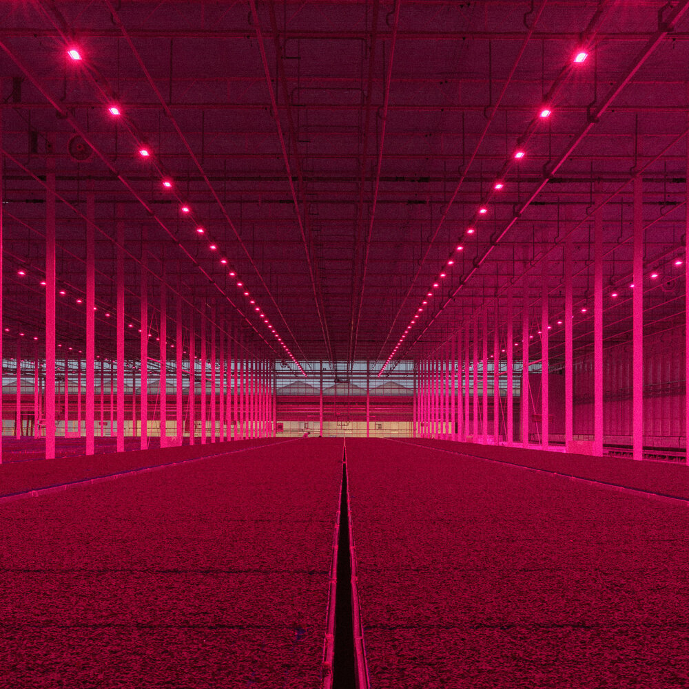 The Koppert Cress greenhouse in the Netherlands