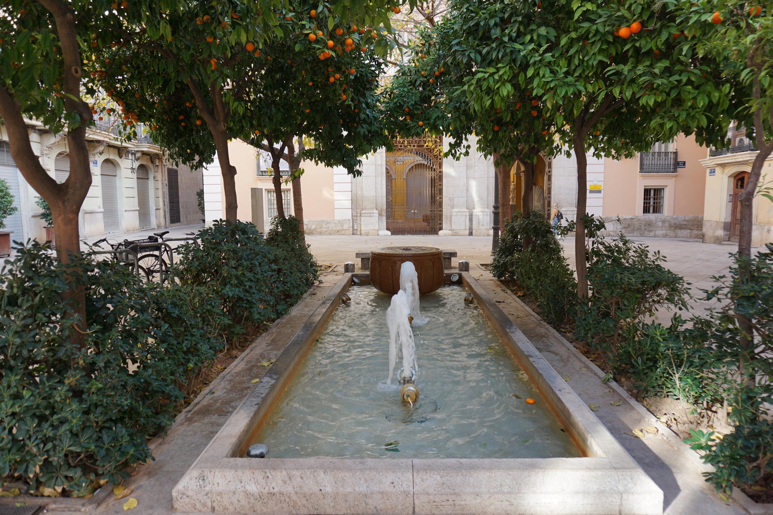 Valencia oranges